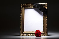 Gold, blank mourning frame with sympahi flower royalty free stock photo