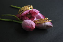 Gold bracelet with pink flower lotus  on black. Gold jewelry. Royalty Free Stock Photography