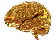 Gold brain. The 3d illustration Stock Photos