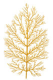 Gold branch Royalty Free Stock Image