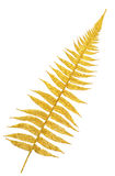 Gold branch of a fern Stock Photos