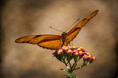Gold and brown butterfly stock image