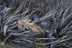 Gold and Brown Fall Frosted Leaves and Grasses Stock Image