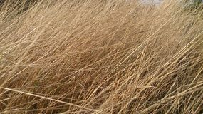 Gold brown grass roots texture wallpapers and backgrounds stock image