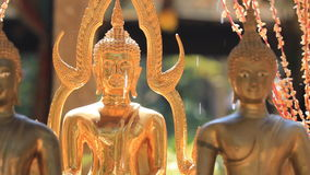 Gold Buddha statue. stock video