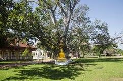 Gold-Buddha-Statue im Garten an im Freien Lizenzfreie Stockfotos