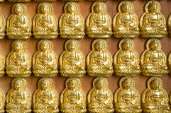 Gold Buddha wall , chinese temple ,thailand Stock Image