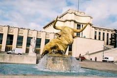 Gold bull Stock Photo
