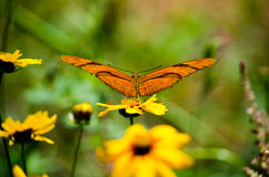 gold butterfly Taking off royalty free stock photos