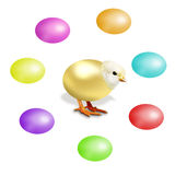 Gold chicken and colorful Easter eggs Royalty Free Stock Images