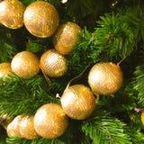 Gold christmas ball on pine tree Royalty Free Stock Photos