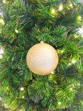 Gold christmas ball on pine tree Stock Photography