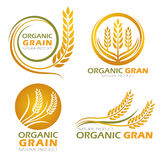 Gold circle paddy rice organic grain products and healthy food banner sign vector set design royalty free illustration