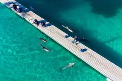 GOLD COAST, AUSTRALIEN - 21. Juni 2015 Delphin in ihrer Einschließung Lizenzfreie Stockfotografie