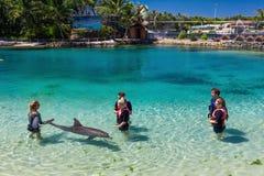 GOLD COAST, AUSTRALIEN - 19. März 2017 Delphin in ihrem enclosur Lizenzfreies Stockbild
