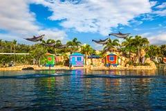 GOLD COAST, AUSTRALIEN - 31. März 2015 Delphinshow bei Seaworld Stockfotos