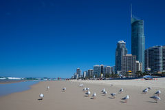Gold Coast beach Royalty Free Stock Photos