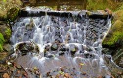 Gold Coast Botanical Gardens Stock Photo