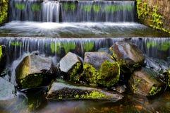 Gold Coast Botanical Gardens Royalty Free Stock Image