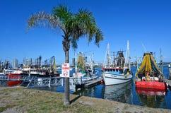 Κοβάλτιο των ψαράδων Gold Coast - Queensland Αυστραλία Στοκ εικόνα με δικαίωμα ελεύθερης χρήσης