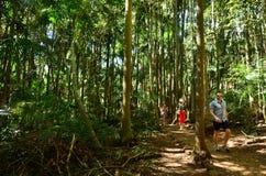 Τοποθετήστε το Gold Coast Queensland Αυστραλία Tamborine Στοκ φωτογραφία με δικαίωμα ελεύθερης χρήσης