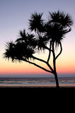 Gold Coast Sunset. Image taken of a sunset with an outline of a pandanis palm on the gold coast Stock Photo
