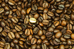 Gold coffee bean royalty free stock images
