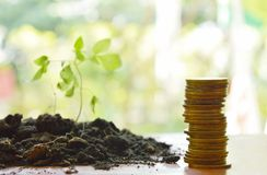 Gold coin arrange and little plant in dirt on wooden board Stock Photo