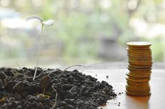 Gold coin arrange and little plant in dirt on wooden board Stock Photography