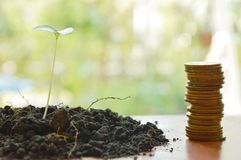 Gold coin arrange and little plant in dirt on wooden board Stock Images