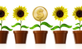Gold coin with dollar sign on the flower pot. 3D illustration Royalty Free Stock Photography