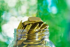 Gold coin money in the glass jar on table in garden with green b. Ackground, for saving for the future banking financial concept Stock Photos