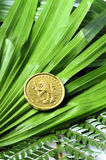 Gold coin in nature Stock Images