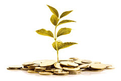 Gold Coins and golden plant Stock Photography
