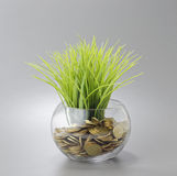 Gold Coins, Grass and Bowl - Business Concept Stock Photos