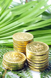 Gold coins in nature Royalty Free Stock Photography
