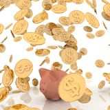 Gold coins and piggi-bank Stock Photos