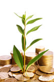 Gold coins and plant Stock Photo
