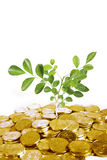 Gold coins with plant Royalty Free Stock Photo