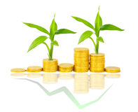 Gold coins and plant. On white Royalty Free Stock Images