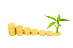 Gold coins and plant Royalty Free Stock Photography