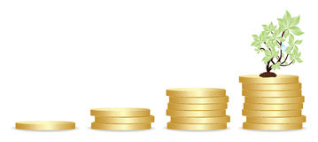 Gold coins and plant Royalty Free Stock Photo