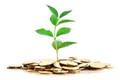 Gold Coins and plant isolated Stock Image