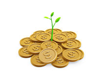 Gold coins and seedling. Isolated on white background Royalty Free Stock Images