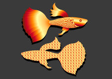 Gold color Guppy fish. On gray background. Vector illustration or flat art royalty free illustration