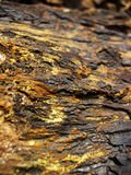 Gold colored petrified wood. Texture background Stock Images