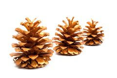 Gold cones Stock Photography