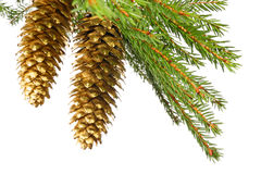Gold cones Stock Photos