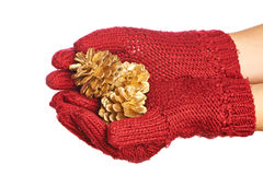Gold cones in the hands in red gloves isolated Royalty Free Stock Image