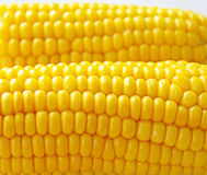 Gold corn Stock Photography